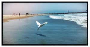 Vogel fliegt am Strand Venice Beach Roger Barz