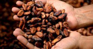 Rohstoff Kakao Zahnarzt Roger Barz Halle