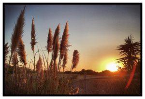 Gras Sunset Zahnarzt Roger Barz Halle