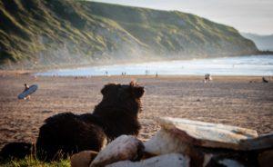 Hund am Strand Zahnarzt Roger Barz Halle