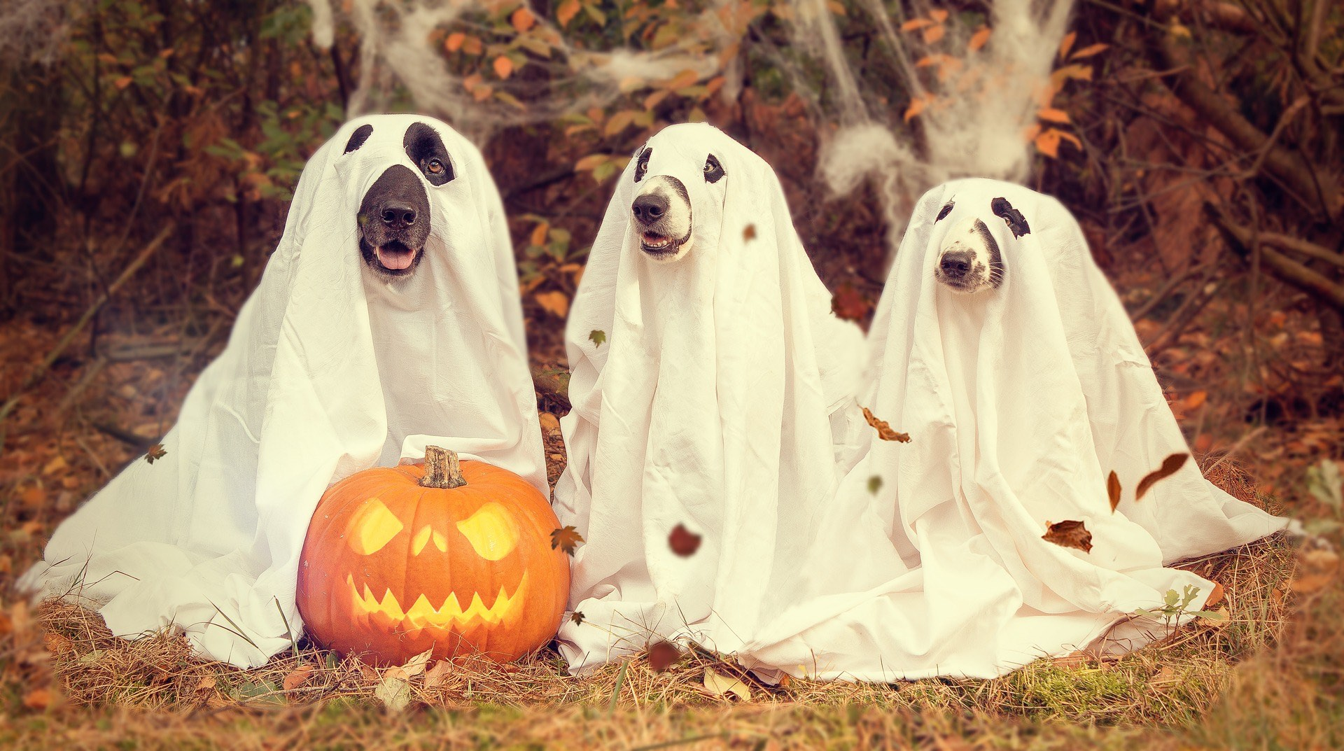 Total Verrückt! – An Halloween Zum Zahnarzt?