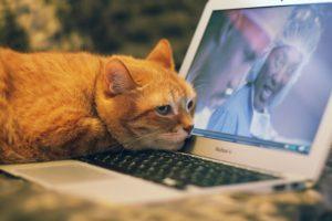 Katze Laptop Zahnarzt Roger Barz Halle