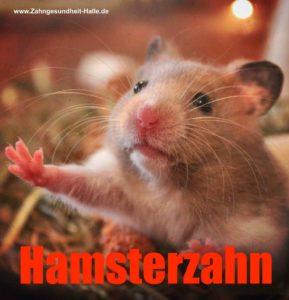 Hamsterkäufe Zahnarzt Roger Barz Halle