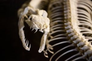 Reptilien Zahnarzt Roger Barz Halle